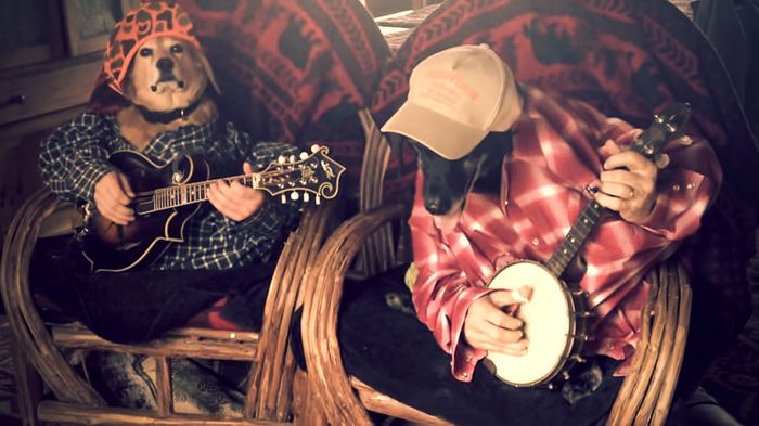 Två sköna hundar klädda i flanellskjortor lirar banjo. Jodå, du läste rätt. http://delbart.se/hundar-spelar-banjo/