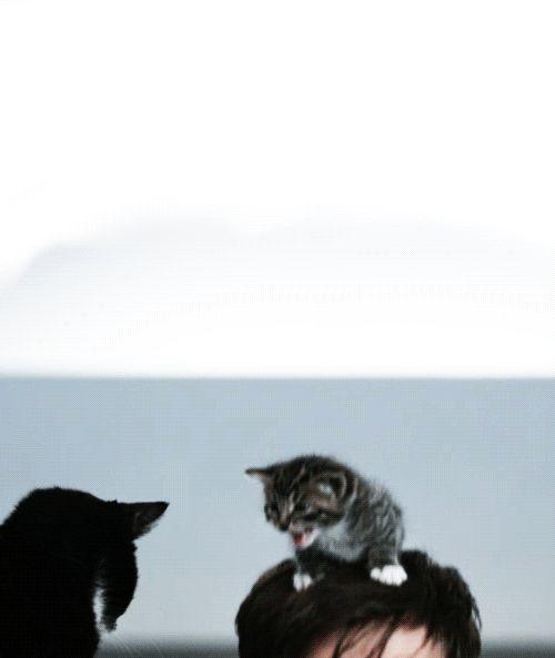 David Tennant and kittens. (GIF)