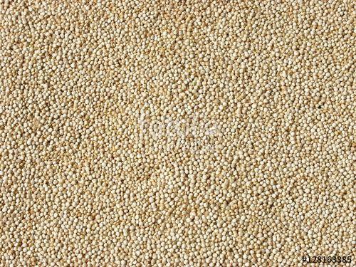 """Frische Quinoa Samen als """"Superfood"""" auf einem Teller in der Küche, für eine gesunde, glutenfreie und eiweißhaltige Ernährung"""