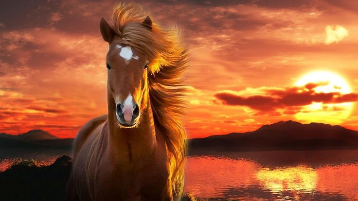 download wallpaper horses sunset - photo #29
