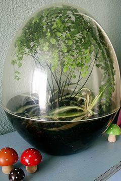terrarium #terrarium #plant