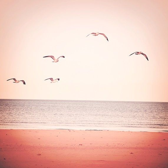 Beach Photograph- Flight- 8x8- Affordable Home Decor- blush pink, peach, and slate blue photograph of gulls along the beach