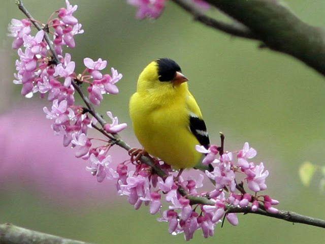 NAŠE ZAHRADY: Zpěvní ptáci naší zahrady