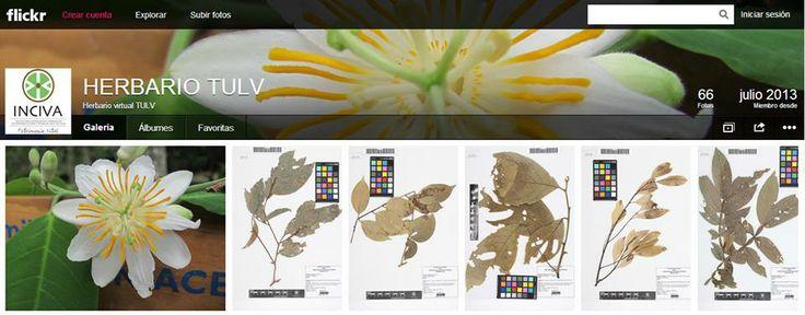 Herbario virtual de Inciva Patrimonio Vital en Tuluá - Valle del Cauca http://www.flickr.com/photos/98771984@N05/