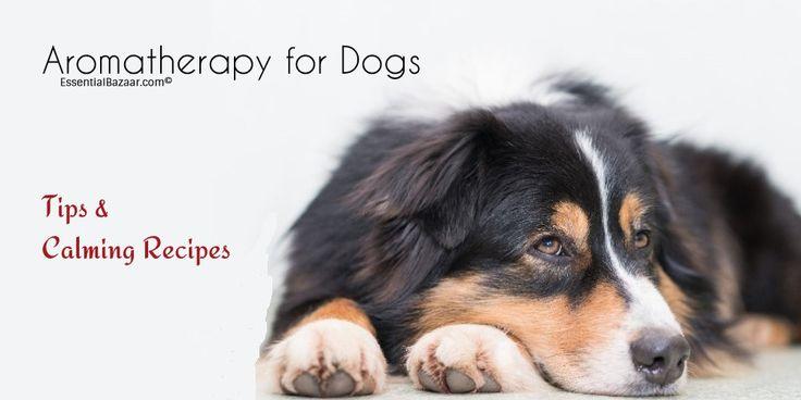 Essential Oils Dog Anxiety!
