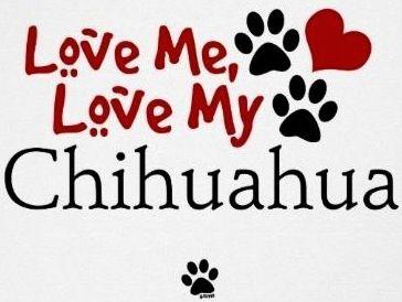 Chihuahua quote via www.Facebook.com/CuteChihuahuaFans