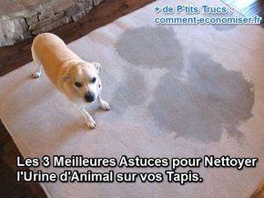 Voici les 3 meilleures astuces pour nettoyer l'urine d'un animal sur votre tapis, détaillées pour vous. Découvrez l'astuce ici : http://www.comment-economiser.fr/nettoyer-urine-animal.html?utm_content=buffer6be2e&utm_medium=social&utm_source=pinterest.com&utm_campaign=buffer