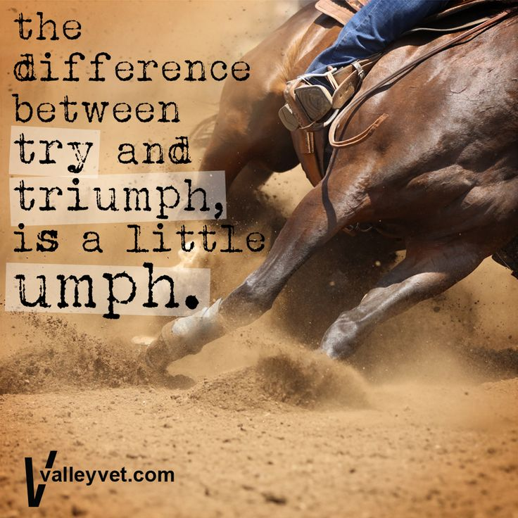 Inspirational Quotes On Pinterest: Best 25+ Western Horse Quotes Ideas On Pinterest