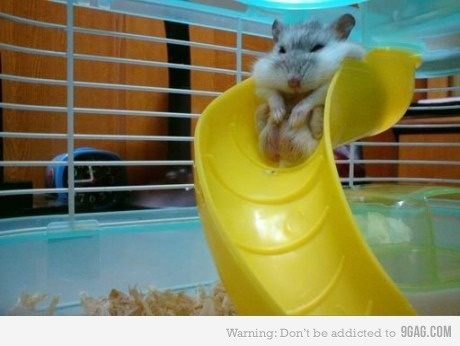 """""""Damn it, I'm fat""""    and yes, i miss the hamsters my daughter and i used to have as pets... Mr. Jumbo and Mrs. Kelly :("""
