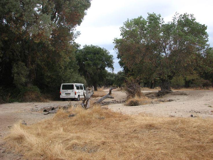 El Arroyo de Valbuena queda seco en el estío y vuelve a renacer con las primeras lluvias otoñales, fruta de las cuales saldrán las suculentas setas y llegará el celo de los ciervos.