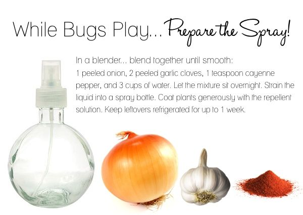 Need to try: keeps bugs off of your garden plants...question is how often do you need to apply it?