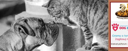 Gramy o tonę karmy - głosuj dla naszych zwierzaków