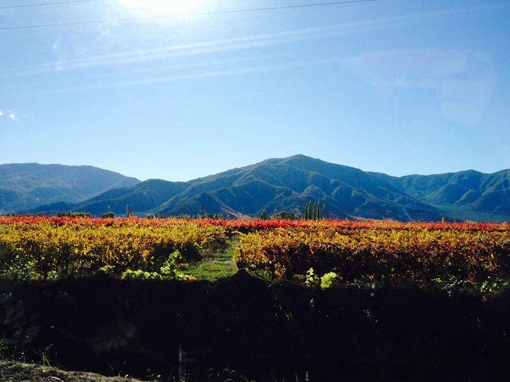 Santa Cruz - Valle colchagua