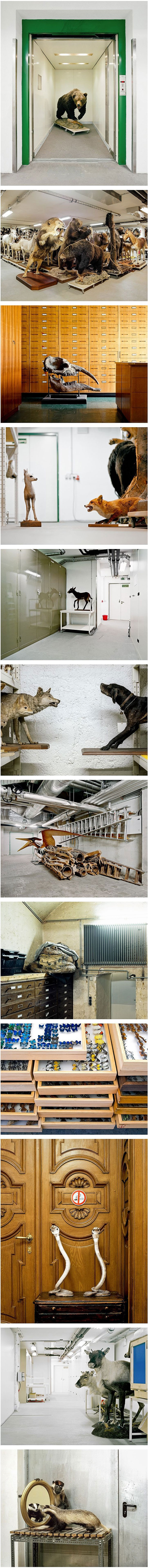 Taxidermied Animals Put On Secret Display By Klaus Pichler
