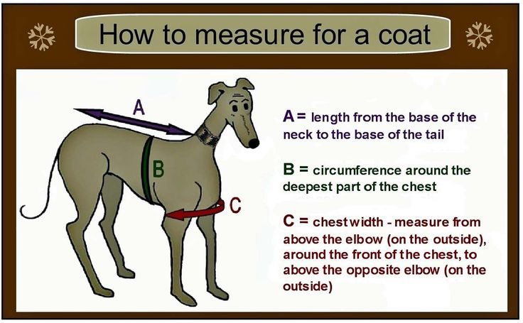 greyhound coat pattern - Google Search                                                                                                                                                                                 More