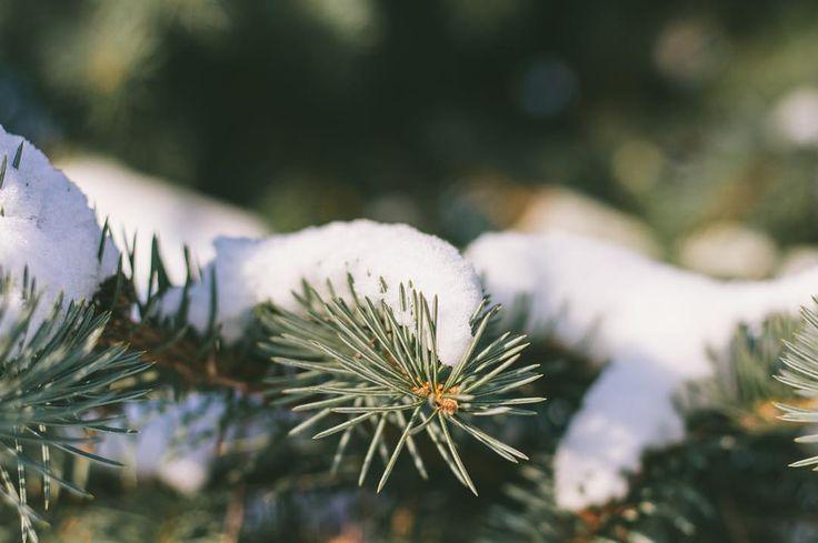 #snow #winter #wintertime #eyeem #EyeEmContest #bokeh #bokehlicious #january #cold #lithuania #lietuva #bestofthebaltics #marijampole #macro #nature #naturelovers #nature_perfection by vixoras