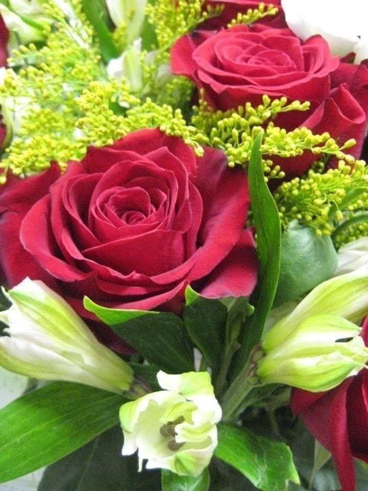 Pin By Marina Nikolashvili On Flor Flowers Plants Rose