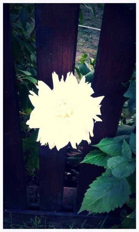 Beautyful white