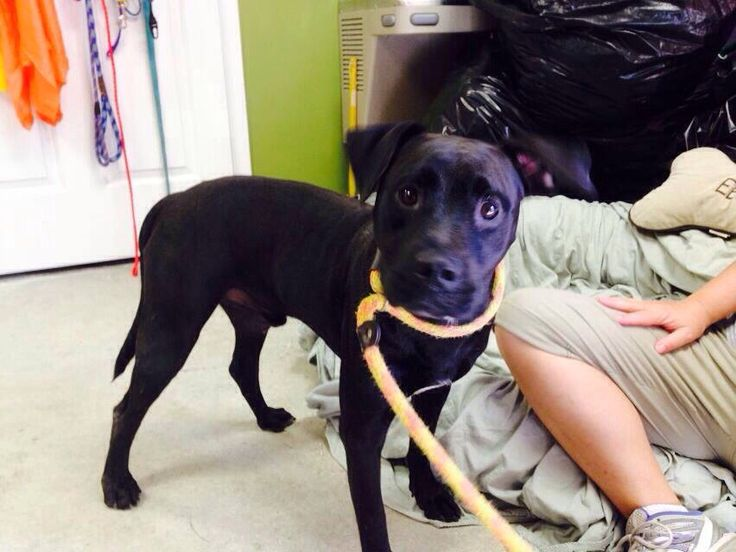 #Founddog #KeystoneHeights #FL ID# A008013 CLAY COUNTY ANIMAL CONTROL LISA PAPSON BLOUNT https://m.facebook.com/story.php?story_fbid=672270489529773&id=128776117212549