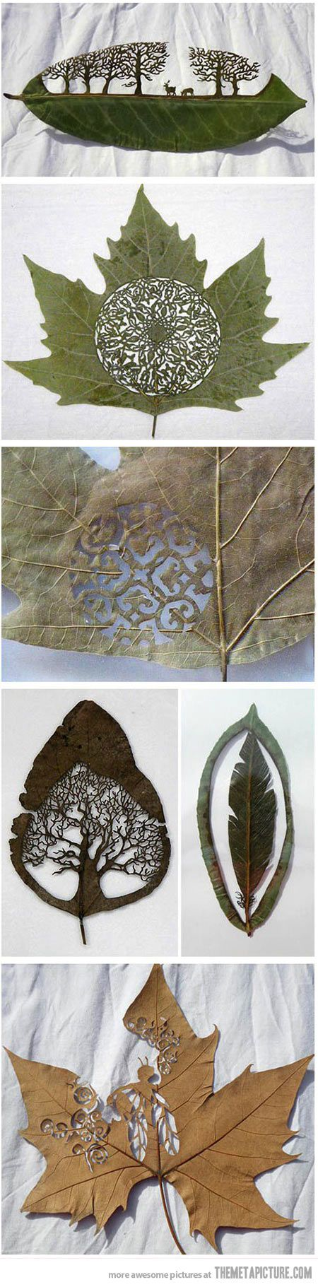 Art in a leaf… Lorenzo Duran Silva, 43, from Guadalajara, near Madrid, was inspired to create the delicate pieces after watching a caterpillar make holes in a leaf by eating it.