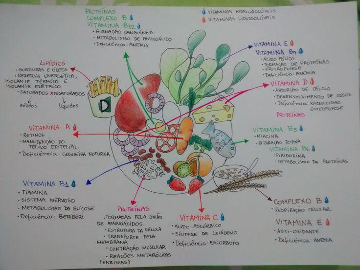 Mapa Mental: Lipidios, Proteinas e Vitaminas