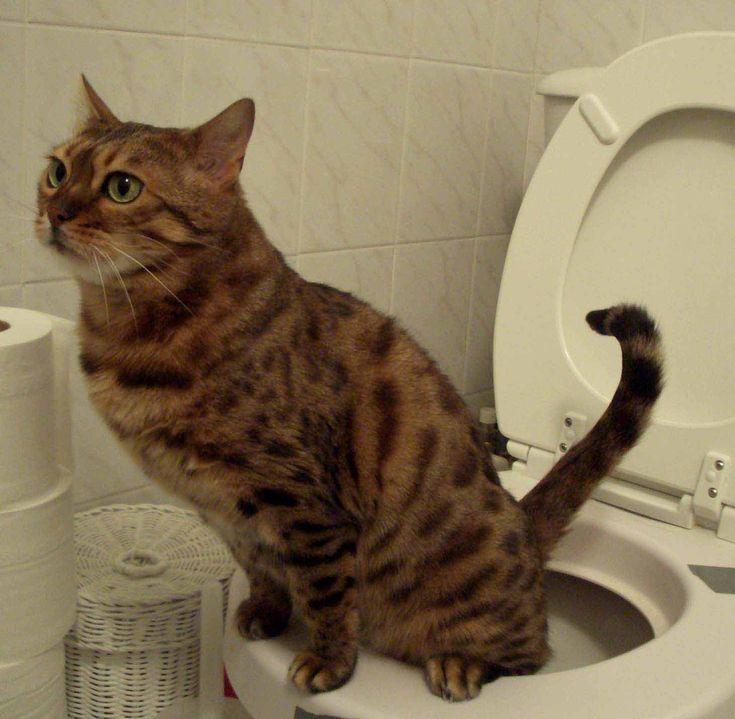 17 beste idee n over kattenurine op pinterest urine van huisdieren reiniger reinigen van. Black Bedroom Furniture Sets. Home Design Ideas