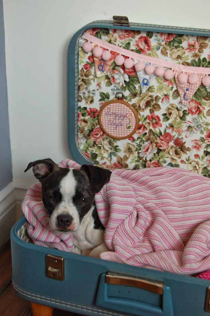 sidmouth poppy suitcase dog bed