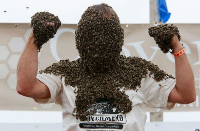 Bee beard competition!