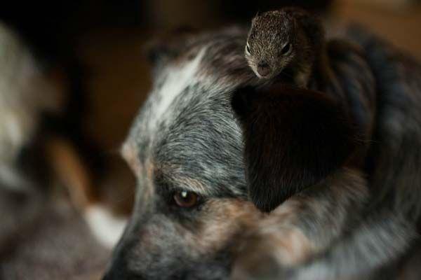 a amizade entre um esquilo e um cão