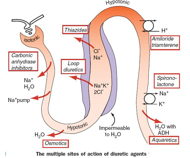 Diuretics Review,Definitions,Notes, Images And Summary - http://usmle2easy.com/diuretics-reviewdefinitionsnotes-images-and-summary/