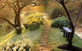 Image result for daffodil garden
