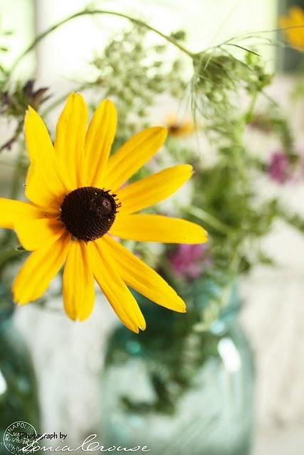 Black eyed susanFlowers Gardens, Beautiful Bloom, Beautiful Creations, Black Ey Susan, Flower Gardens, Gardens Design, Black Eye Susan, Flower Obsession, Favorite Flower