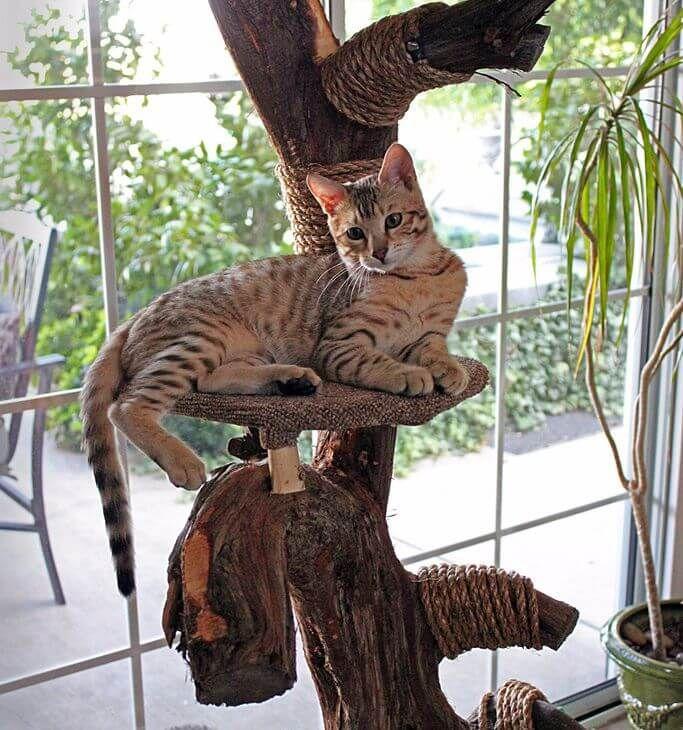 17 mejores ideas sobre arbol rascador para gatos en - Arbol gato ikea ...
