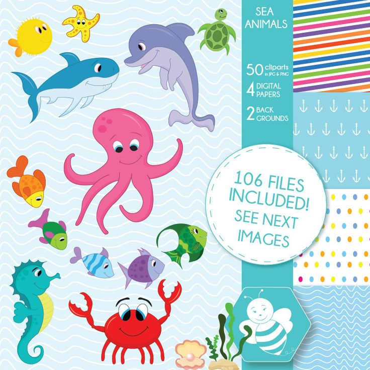 Sea animal clipart commercial use, vector graphics, digital clip art, digital images, CL0023 by Sweetdesignhive on Etsy