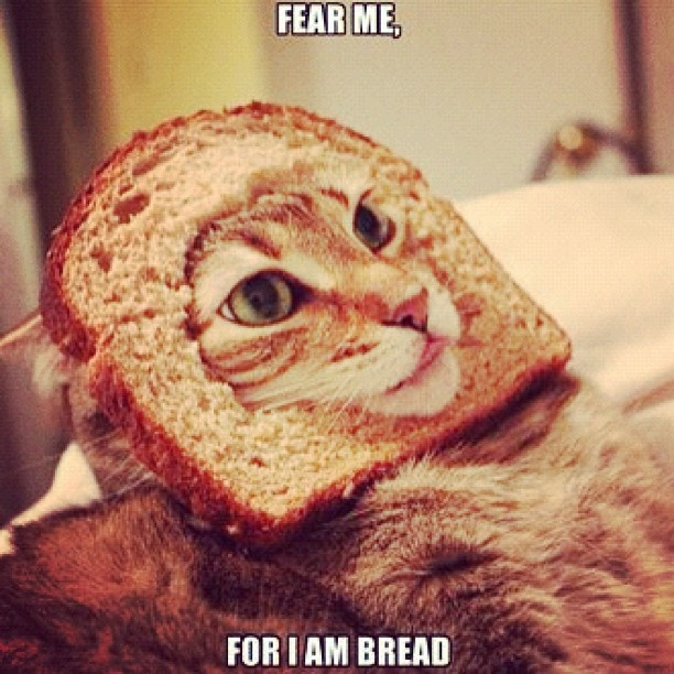 Dear @jakeness08 please feel better soon! In the mean time... Here's a pic of a cat.  www.anilols.co.uk for more funny animals #cats