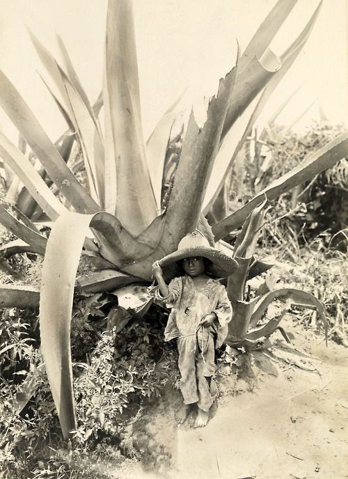 Child in the shade of an Agave plant, Atzcapotzalco, Mexico, 1916 [2298x3160] http://ift.tt/1js3fJ4