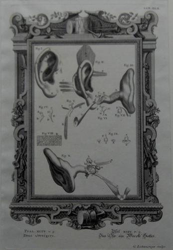 Pasl. XCIV [Ear] by G. Lichtensteger after Johann Jakob Scheuchzer