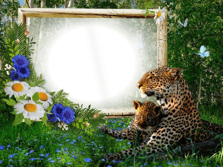 7 best WILDLIFE images on Pinterest | Alpha bet, Alphabet and Frame