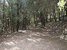 camping in Toscane, mooi in het bos, met prachtig uitzicht, vlakbij het leuke oude stadje Spello