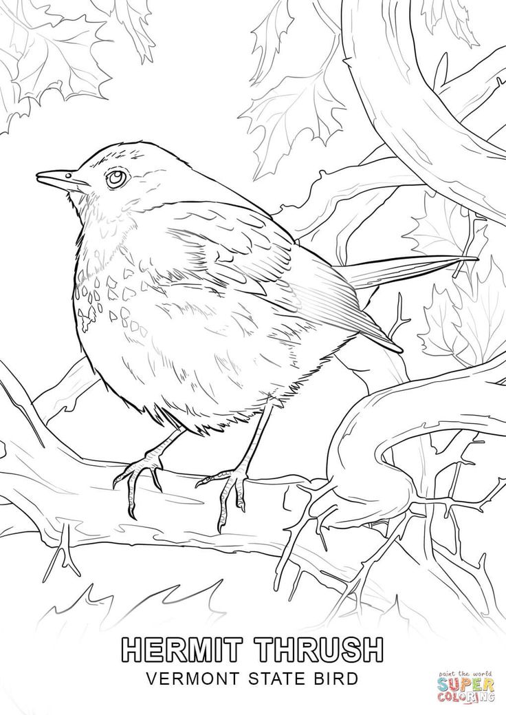 Click the Vermont State Bird coloring