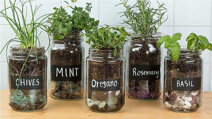 Αρωματικά φυτά είναι εκείνα που αναδύουν άρωμα και το ιδιαίτερο γνώρισμα τους είναι η ύπαρξη αιθέριων ελαίων στην σύσταση τους.