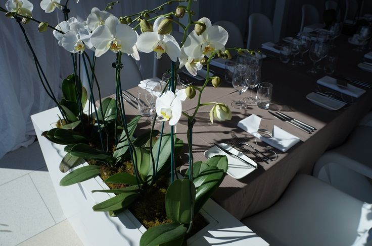 feature event | Food And DesireWhere the Grass is Green event Styling with food&desire