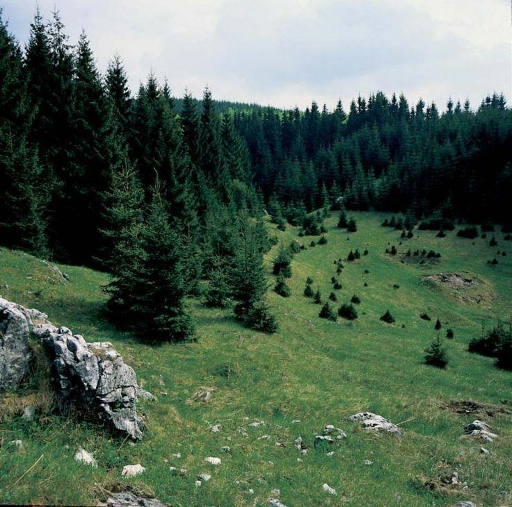 Csévharaszti ősborókás (Természetvédelmi terület) (Csévharaszt)