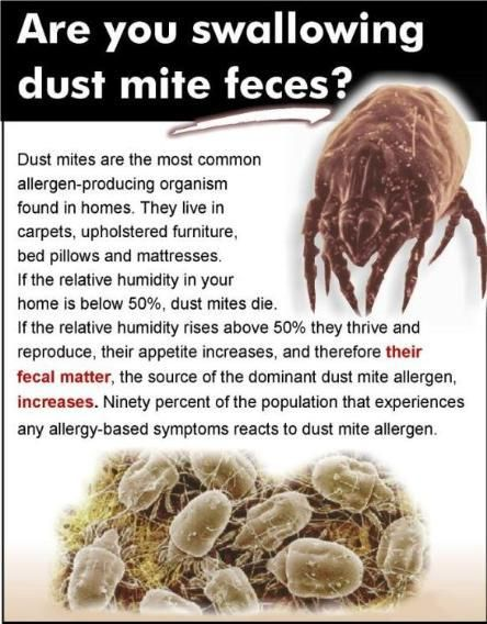 Dust Mites Info From Http Sofacleaningmalta Com Our