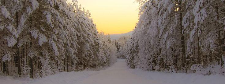 ©Liss Explore Outdoors #sunset #winter #winterwonderland #örnsköldsvik #norrland #vinter #snow #landscape #landskap #christmas #bredbyn #hiking #naturephotography #forest #snowing #vinterstemning