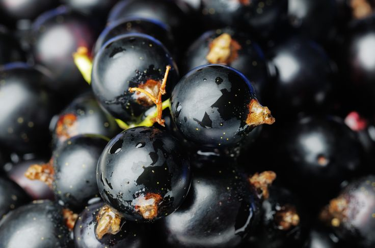 Black Blueberries - A Stimulant for the Brain - http://topnaturalremedies.net/natural-treatment/black-blueberries-a-stimulant-for-the-brain/