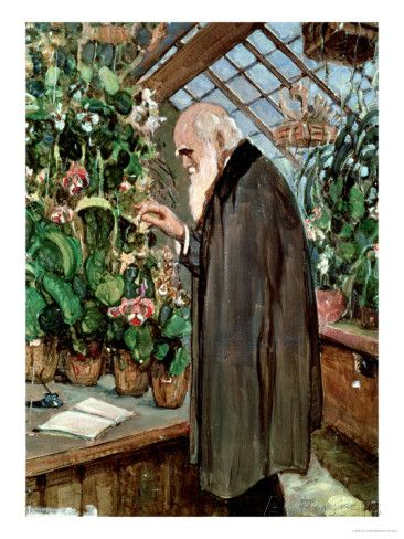 Charles Robert Darwin Giclee Print by John Collier at AllPosters.com