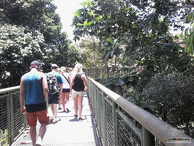It's a little on the warm side at the Rainforest Discovery Centre :-p But there's lots of shaded area in and around the canopies :)