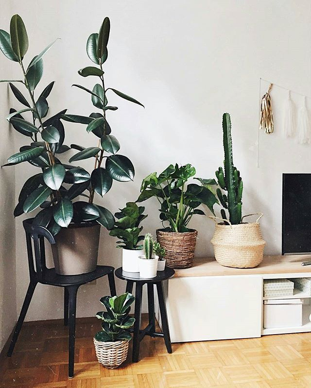 Do you see the buntings on the right? Tomorrow we'll celebrate our first @Instagram birthday by announcing the 3 winners of an #urbanjunglebook  You can still join in for a chance to win, check the photo with the 3 books below in our feed. Green fingers crossed!  :@dariadaria_com #urbanjunglebloggers