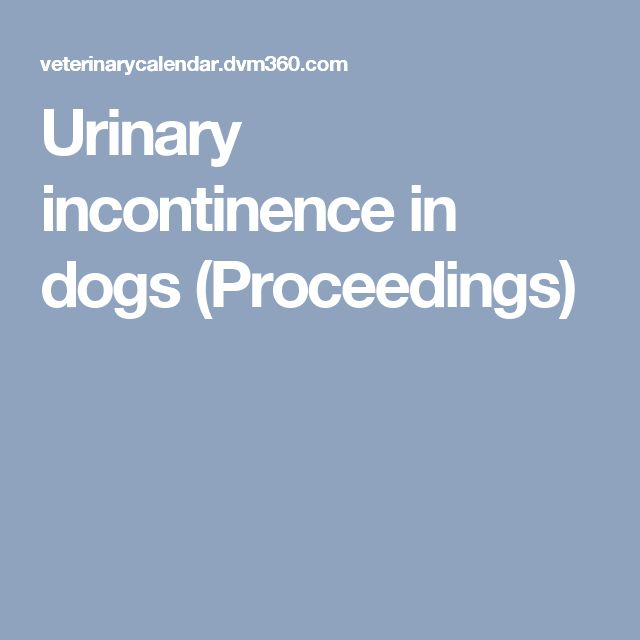 Natural Remedies For Bladder Incontinence In Dogs